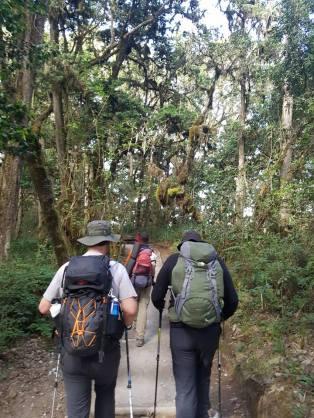jungle walkers