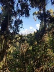 kili jungle